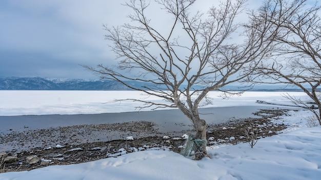Leafless tree in winter landscape