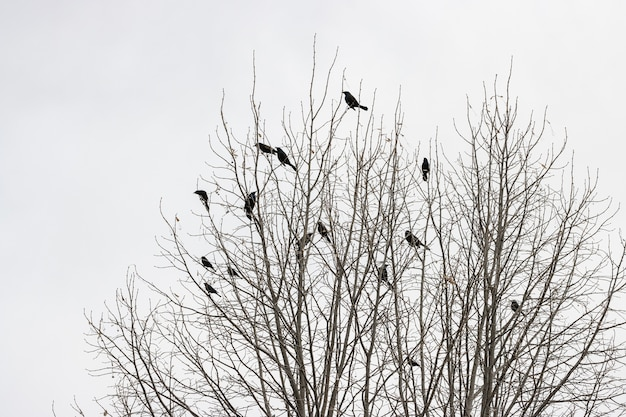 Albero senza foglie con uccelli sui rami