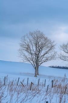 Безлистное дерево со снежным пейзажем