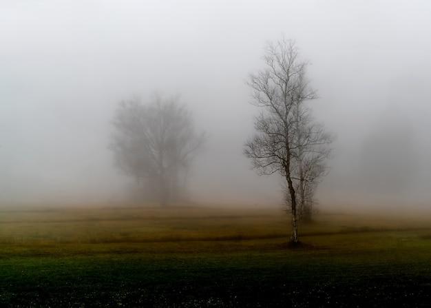 Безлистное дерево
