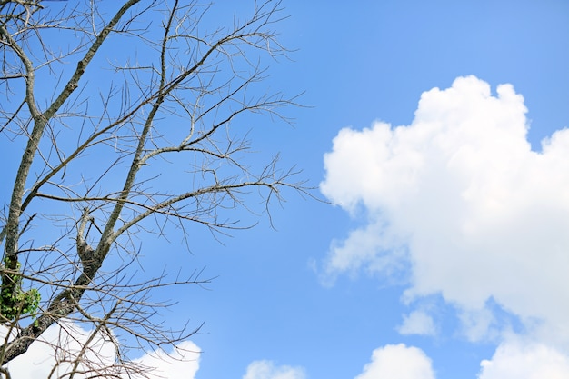 Leafless trees against the cloudy blue sky