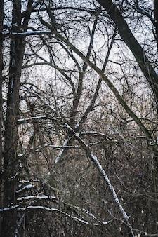 Голые деревья зимой