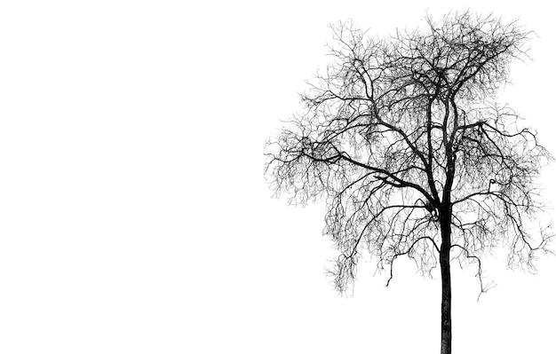 Безлистные деревья в темноте, оставляя жуткую сцену; силуэт страшной задней стороны фона дерева хэллоуина.