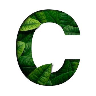 Leafs шрифт c из настоящих живых листьев с драгоценной бумагой, вырезанной в форме шрифта. листья шрифта.