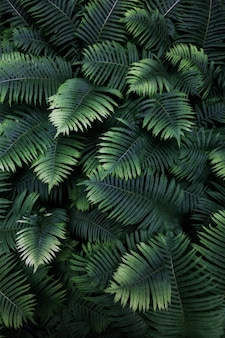 Leafs fern tropical top view nature