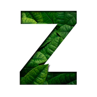 Leafs font z made of real alive leafs with precious paper cut shape of font. leafs font.