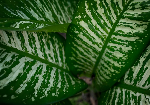 葉は大気汚染を浄化するために使用されます。高品質の写真