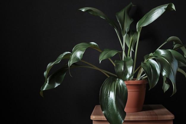 緑豊かな緑のユーカリ鉢植えのスツール