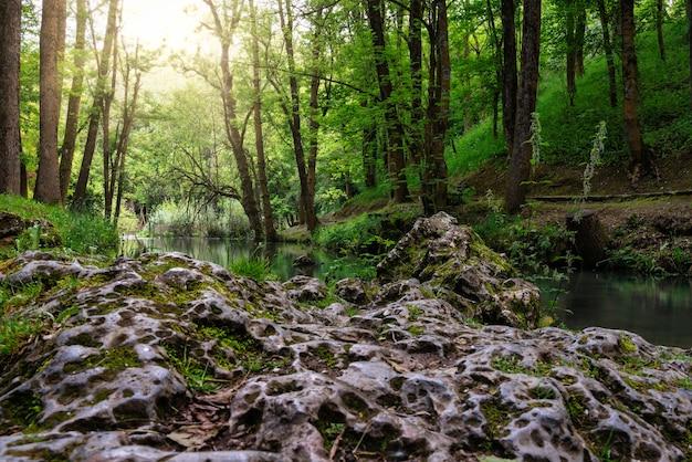 Лиственные, зеленые леса у истока реки эбро в фонтибре, кантабрия, испания.