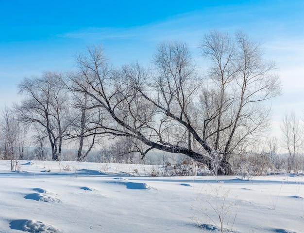 겨울 필드에 나무에 기대어