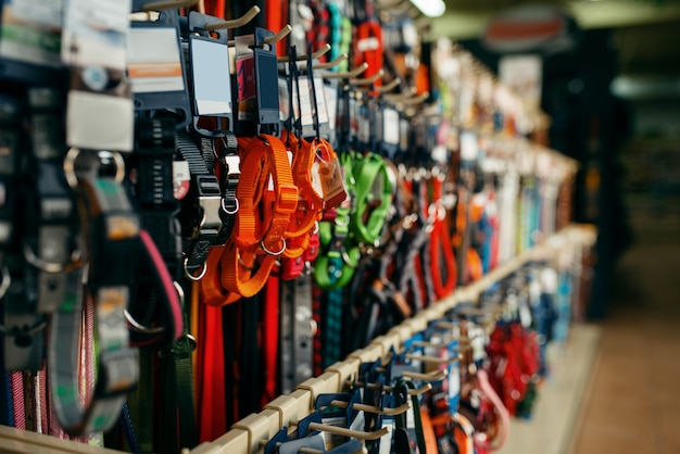 Leashes and collars variety on showcase in pet store, nobody. equipment in petshop, accessories for domestic animals