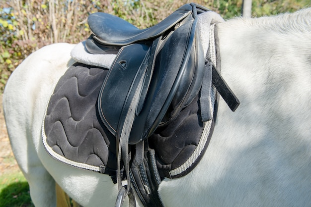 Leather saddle on the white  horse