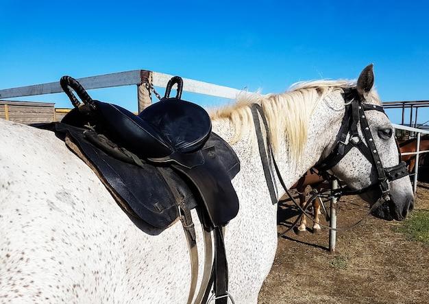 Leather saddle with belts on   horse back