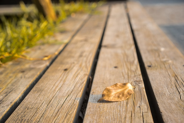 Leave close up over wooden boards