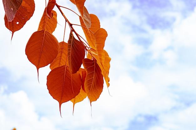 Leave tree on sky