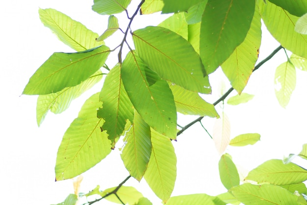 Leaved green nature background.