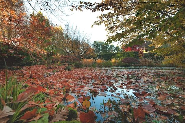 가을이면 연못가에 떠 있는 낙엽들