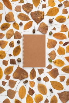 Leaves and acorns around notebook