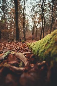Листья и стволы в лесу