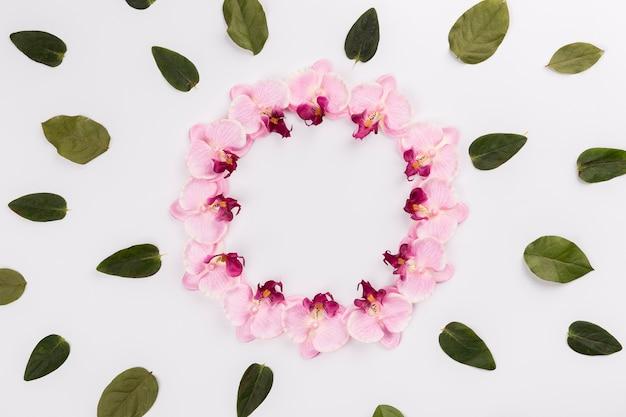 蘭からの円の周りの葉