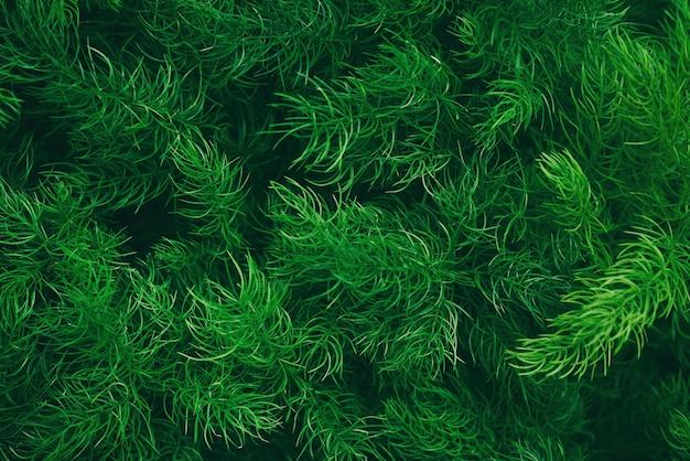 葉の背景、自然なパターン、デザイン テンプレート用のコピー スペースを持つパターン パネルの熱帯の抽象的なレイアウト。
