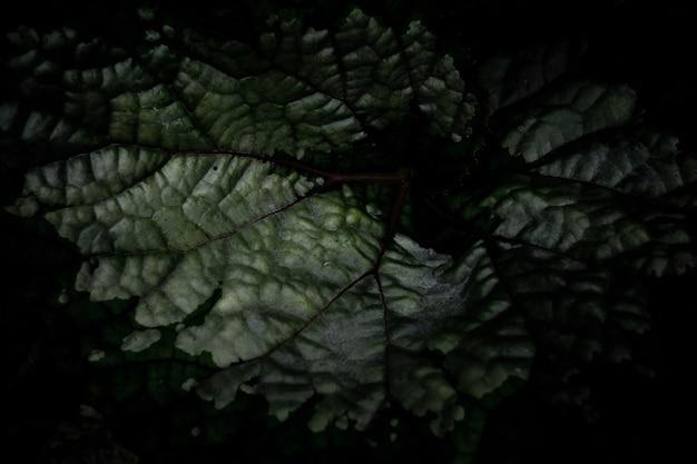 葉の背景、葉のテクスチャ、葉