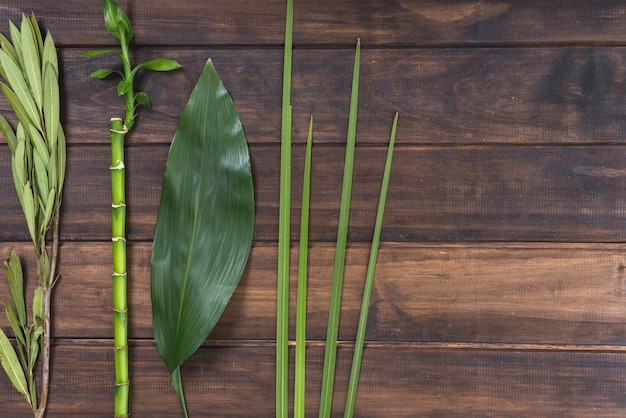 Leaves and bamboo twig on table