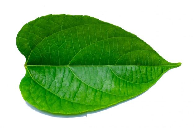 Leaves calathea ornata pinstripe background