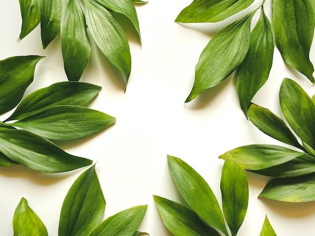 Листья композиции. рама из зеленых листьев на белом фоне. день свадьбы, день матери и женский день концепции. плоская планировка, вид сверху.