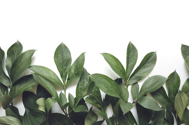 잎 구성입니다. 흰색 바탕에 녹색 잎으로 만든 프레임입니다. 결혼식 날, 어머니의 날 및 여성의 날 개념. 평평한 평지, 평면도.