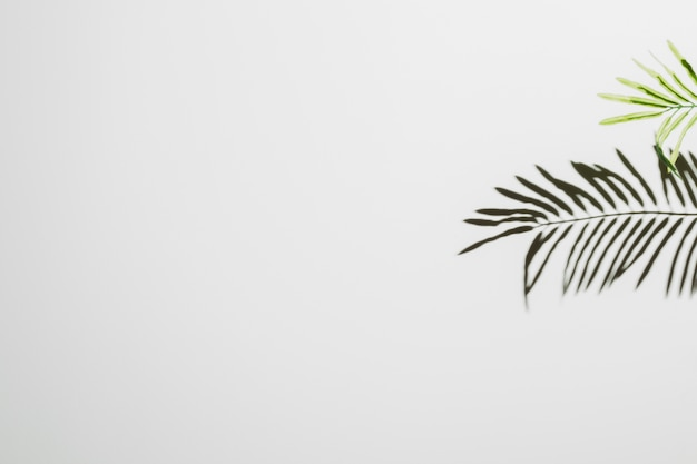 白い壁の背景に落ちる葉