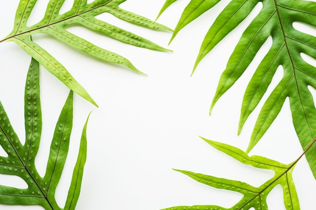Leaves fern pattern on white copy space background