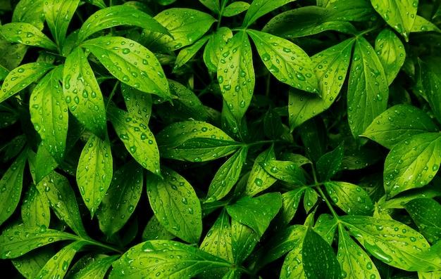 Leaves fern rain drops tropical