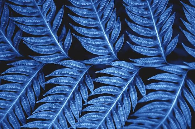 어두운 배경에 고사리를 남깁니다. 야생 숲에서 자연 구성. 2020 년의 클래식 블루 색상. 이국적인 식물의 잎에 깨끗한 정맥