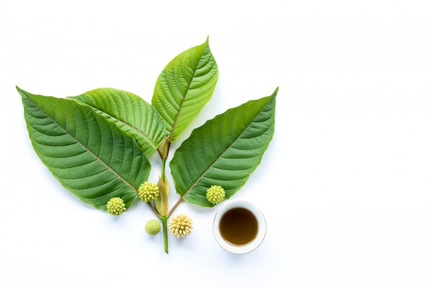 Leaves, flowers, fruits and liquid of kratom or mitragynine on white background isolated