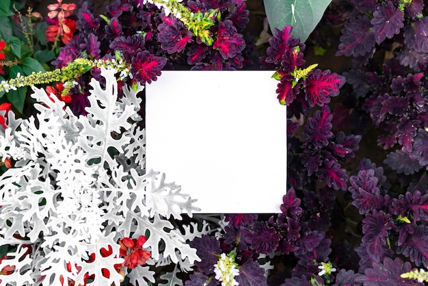 Leaves and flowers layout background with copyspace