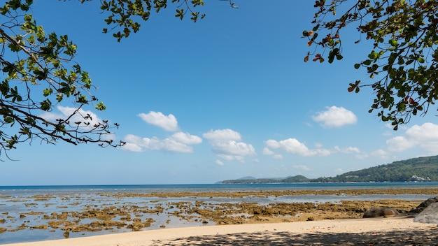 여름 해변 나뭇잎 프레임 놀라운 바다 맑고 푸른 하늘과 흰 구름 해변에 부서 지는 파도 나무는 바다 위에 프레임을 복사 공간입니다.
