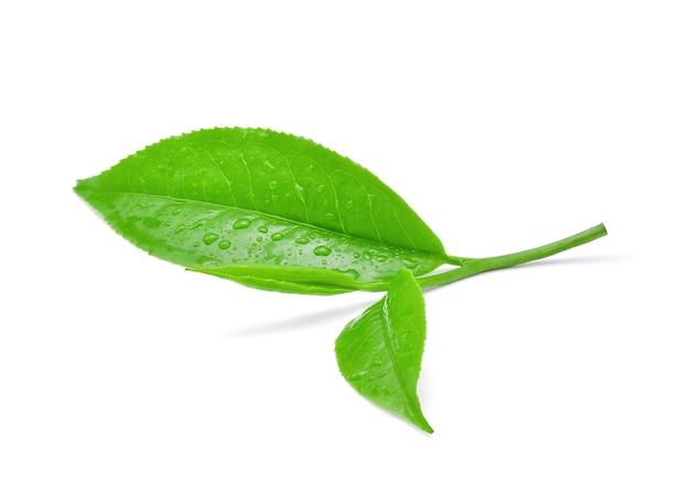 Листья свежий зеленый чай с каплями воды, изолированные на белом фоне.