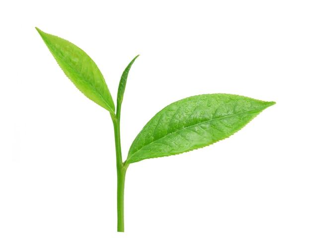 白い背景で隔離の水滴と新鮮な緑茶を残します。