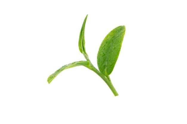 흰색 표면에 절연 물 방울과 신선한 녹차 잎