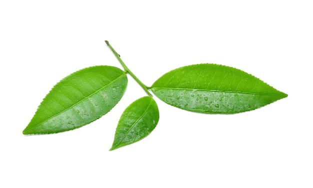 흰색 바탕에 절연 물 방울과 녹차 잎.