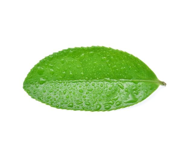Листья зеленого чая с каплями воды, изолированные на белом.