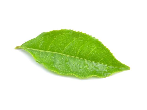 Листья зеленого чая с каплями воды изолированы