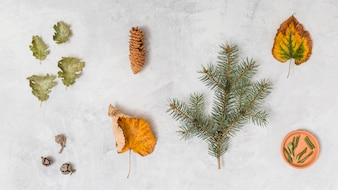 Leaves, herbs and pine