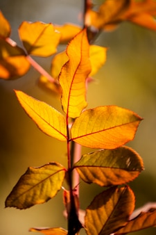 Leaves in autumn