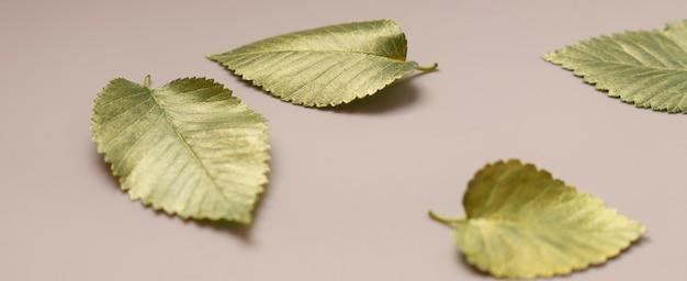 Листья в золотой краске на бежевом фоне осенняя концепция вид сверху осенних листьев с золотой болью ...