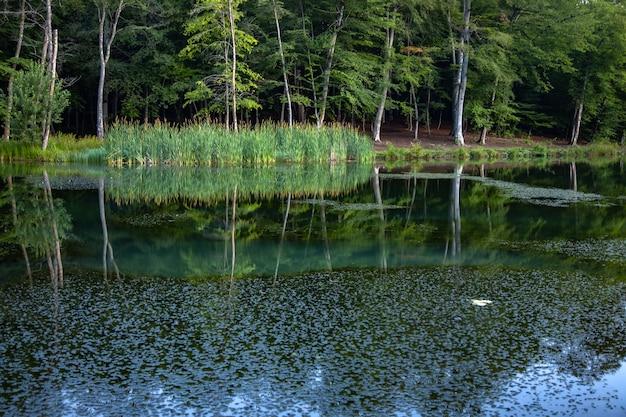 숲 배경으로 호수에 나뭇잎