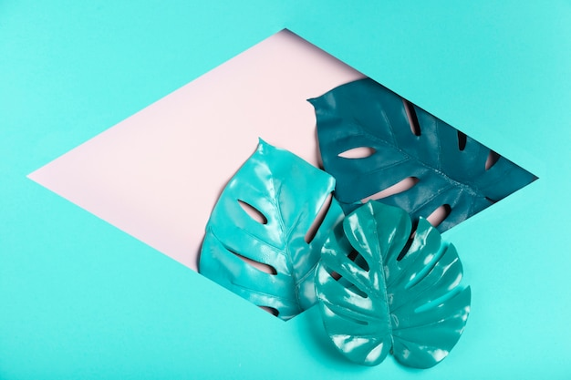 Leaves inside hexagonal paper shape