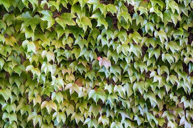 Листья естественный фон живой забор