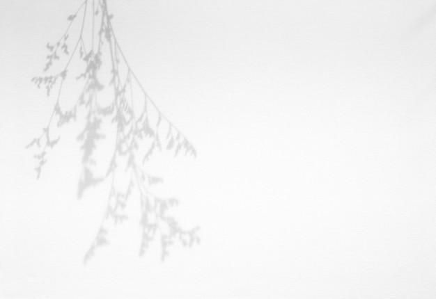 흰색 질감 배경에 자연 그림자 오버레이 나뭇잎